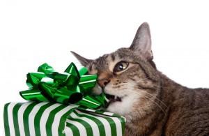 Почему кот облизывает пакеты?