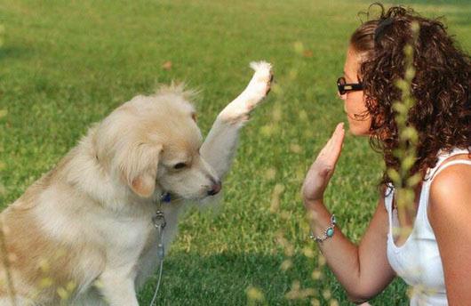 Пёс даёт лапу хозяйке