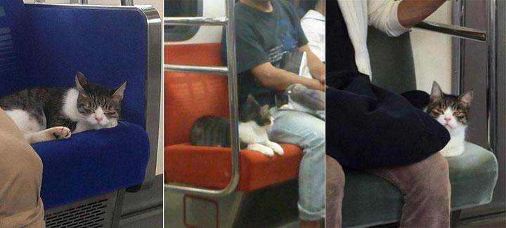 кот в японии в метро