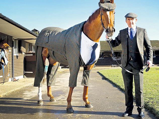 конь в костюме