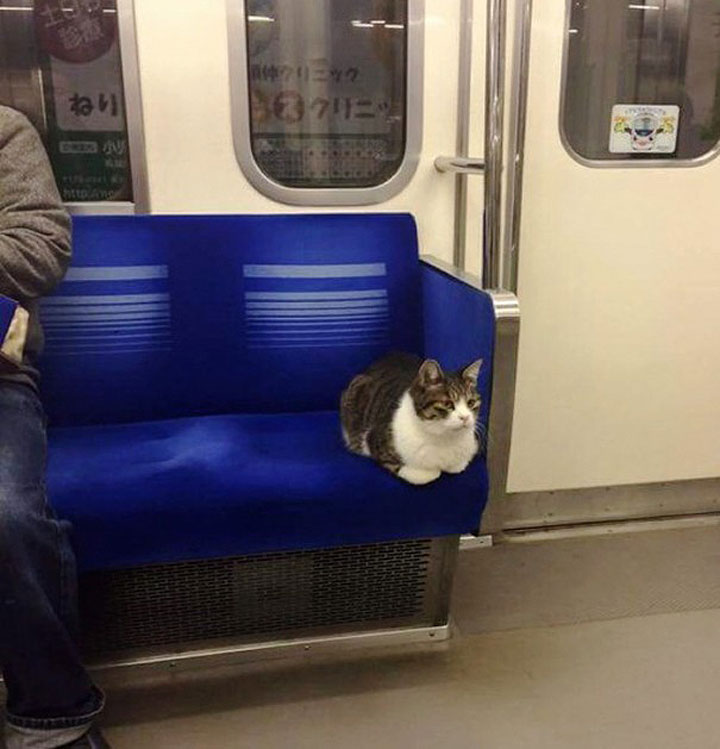 кошка в метро