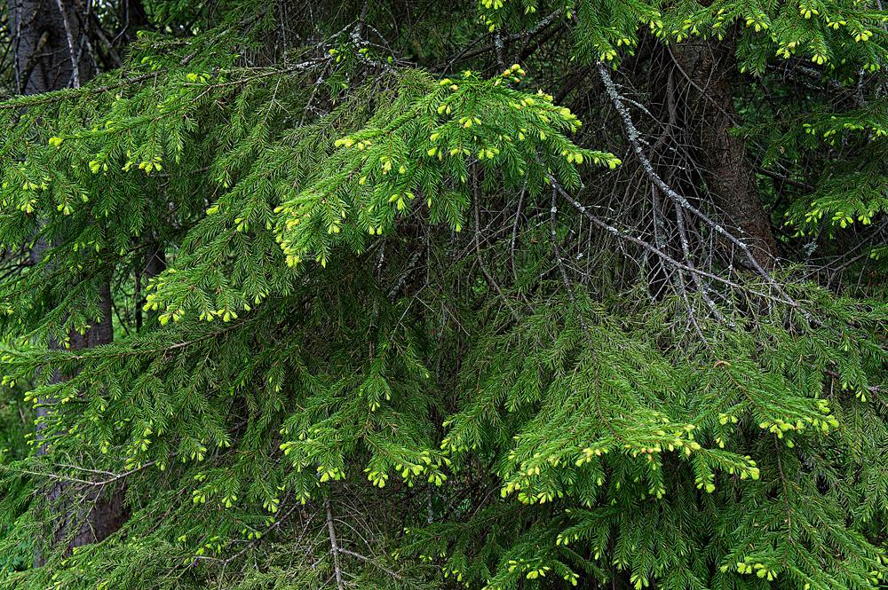 Лес в мае