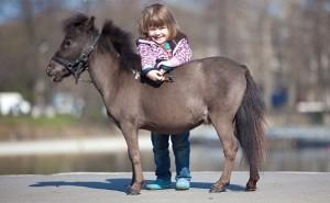 Лошадка Фалабелла