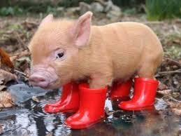 Свинка в сапожках