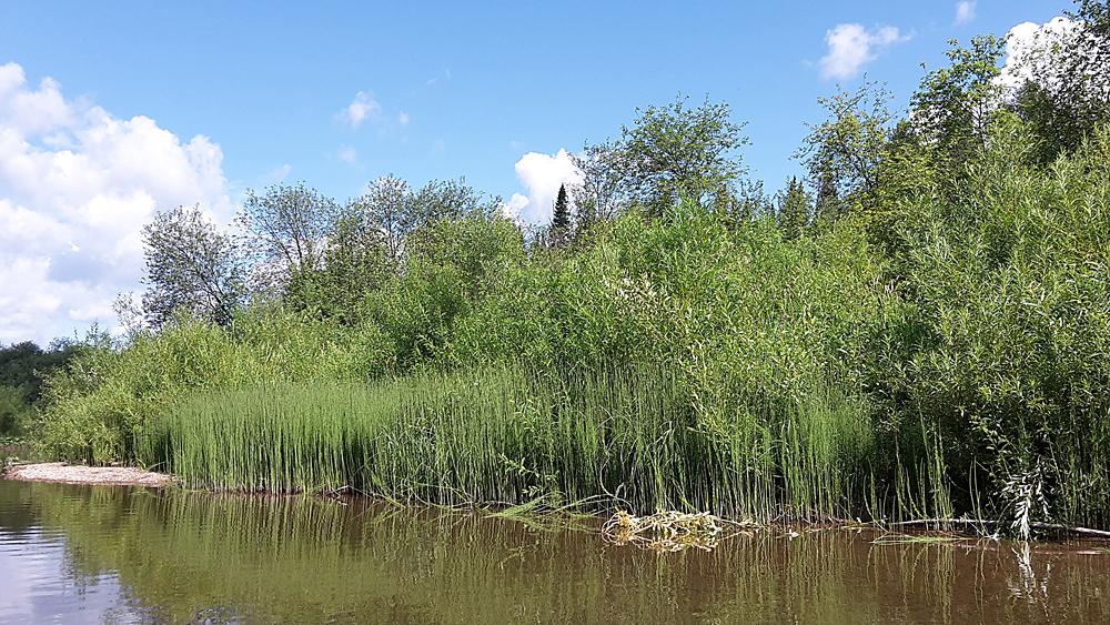 На реке Демид
