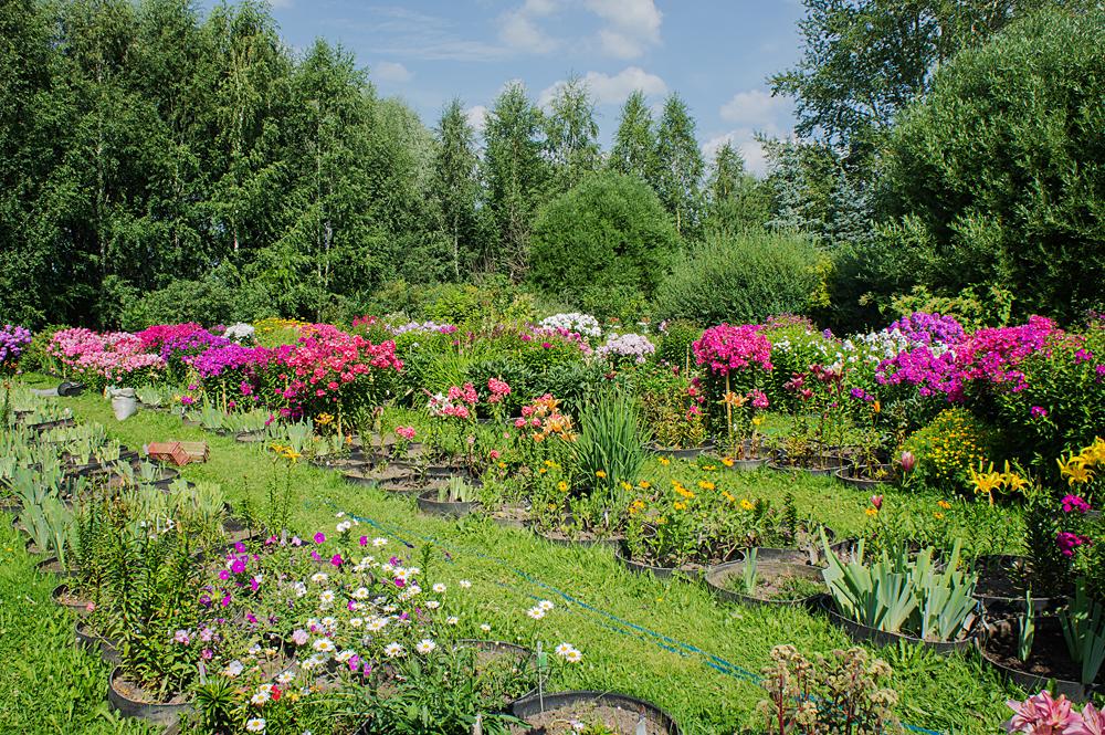 Ботанический сад им. Демидова