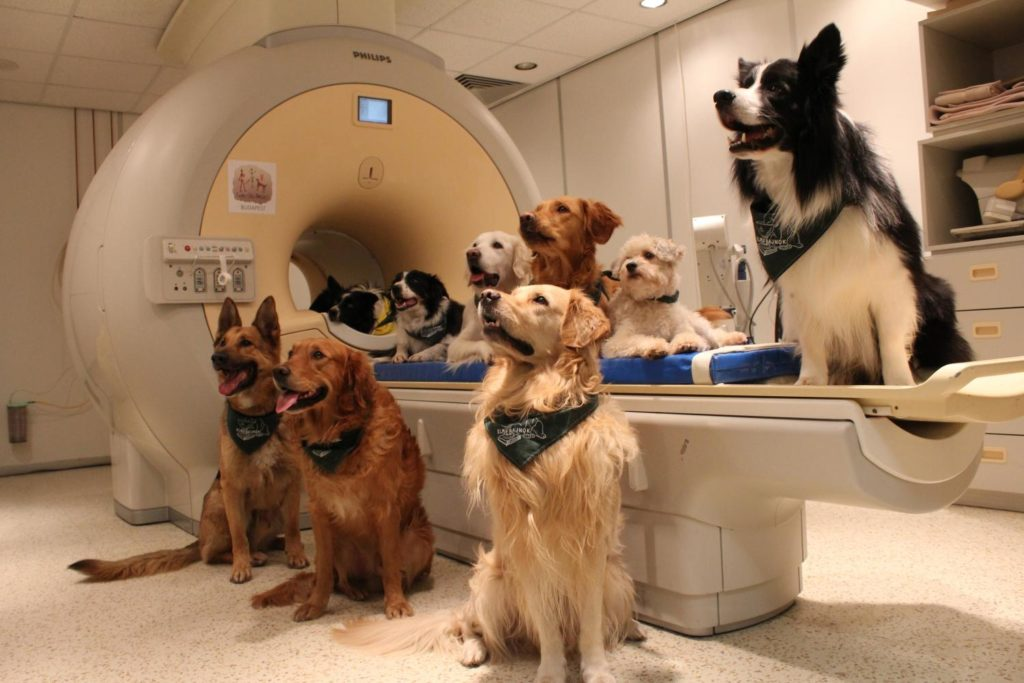 dogs by fMRI scanner