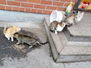 Кошки ждут хозяев