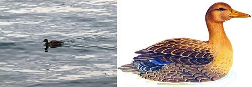 по синему морю золотая уточка плывет загадка для 4 класса