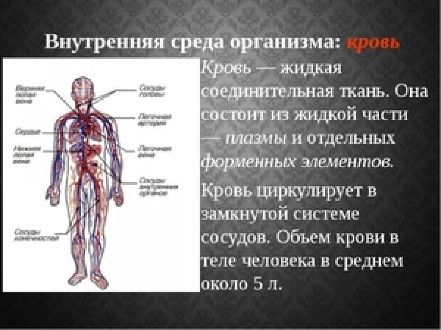 Сколько литров крови в организме взрослого человека