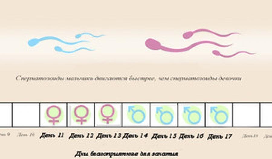 Сколько времени активна сперма