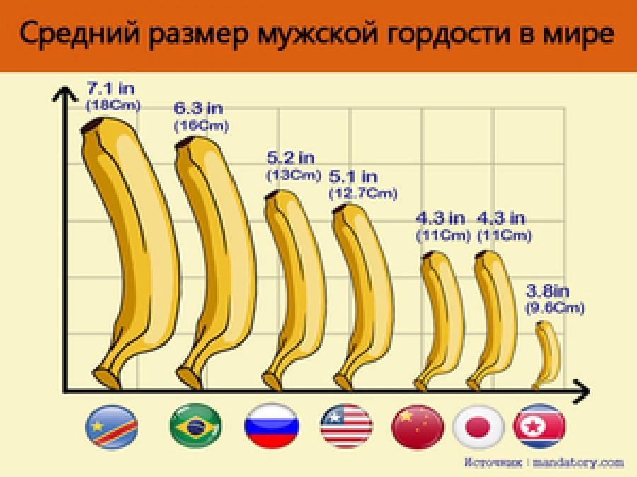 Средняя длина полового члена: правила измерения, какие факторы влияют на размер, данные статистики