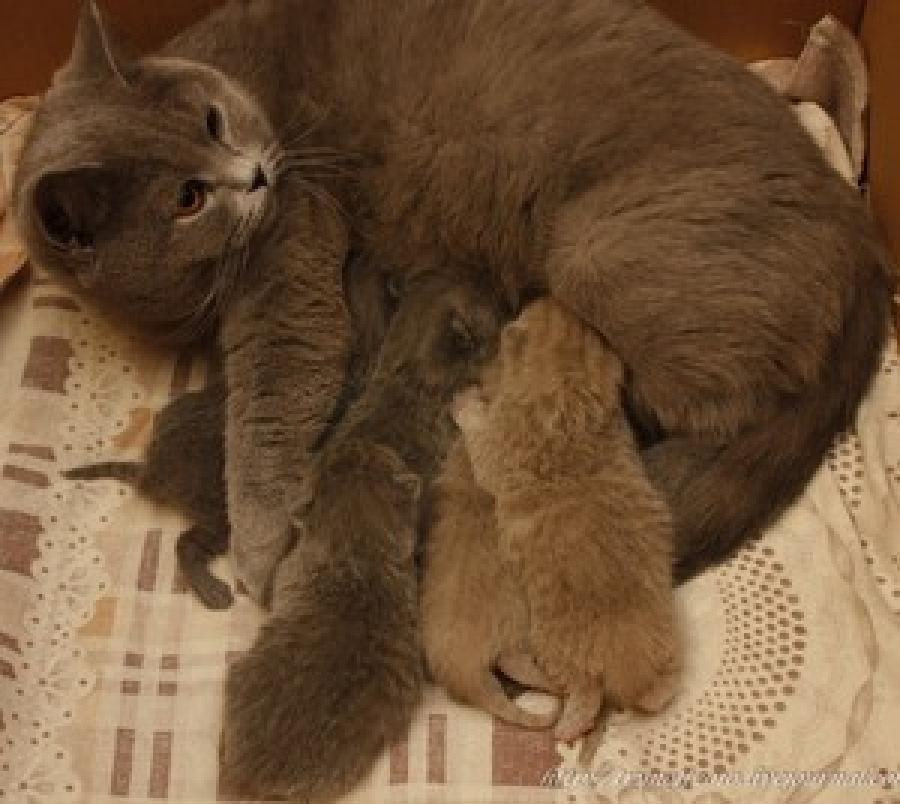 Развитие котят после рождения: когда открываются глаза и появляется зрение, слух, первые зубы