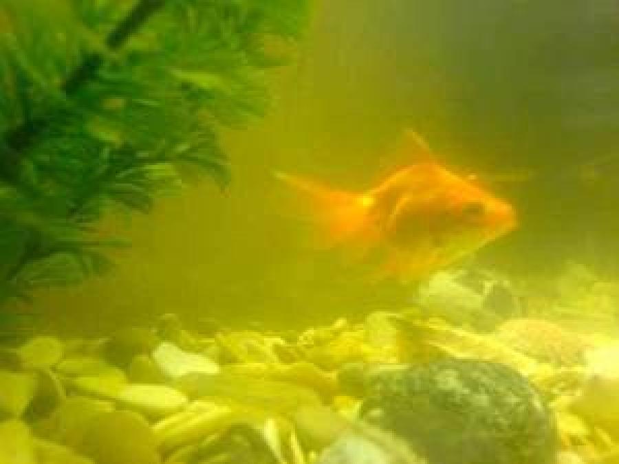 Почему в аквариуме быстро мутнеет вода?