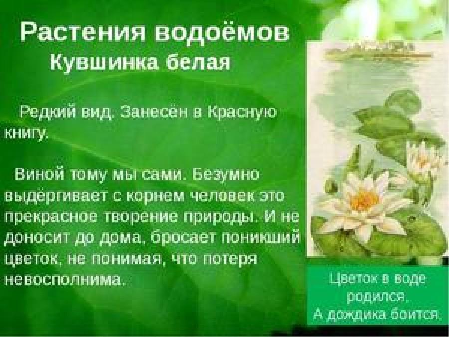 Растения нашего края занесенные в красную книгу