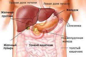 Как проявляются симптомы заболевания печени