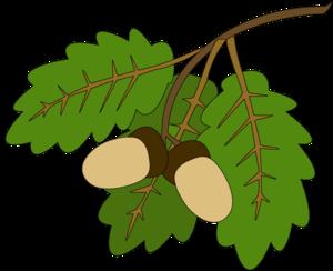 Как начать рисовать дубовый лист