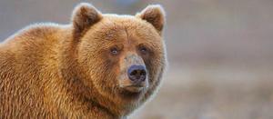 Средний вес медведей и медвежат