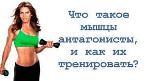 Мышцы антагонисты - описание