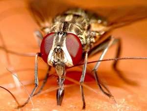 Отчего растёт агрессия мух ближе к осени.