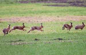 Множество бегущих зайцев