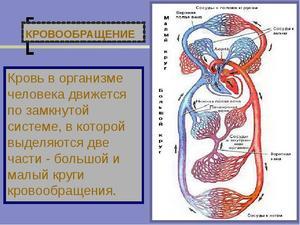 Объем циркулирующей крови в теле человека