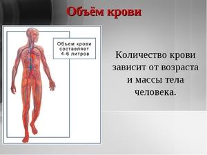 Сколько в человеке литров крови