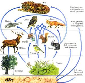 Цепь питания животного мира