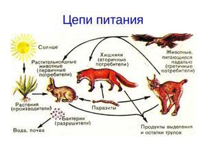 Как питаются животные