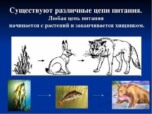 Пищевая цепь животных