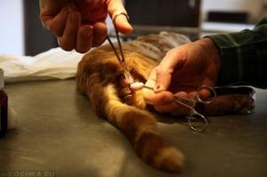 Кастрация котов - за и против