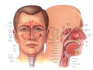 Лор органы и их лечение