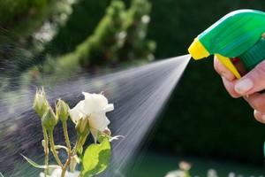 Способы как продлить жизнь розам в вазе