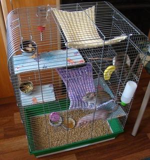 Правила обустройства домика для крыс