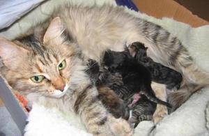 Как развиваются котята