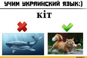 Как учить язык украинский язык