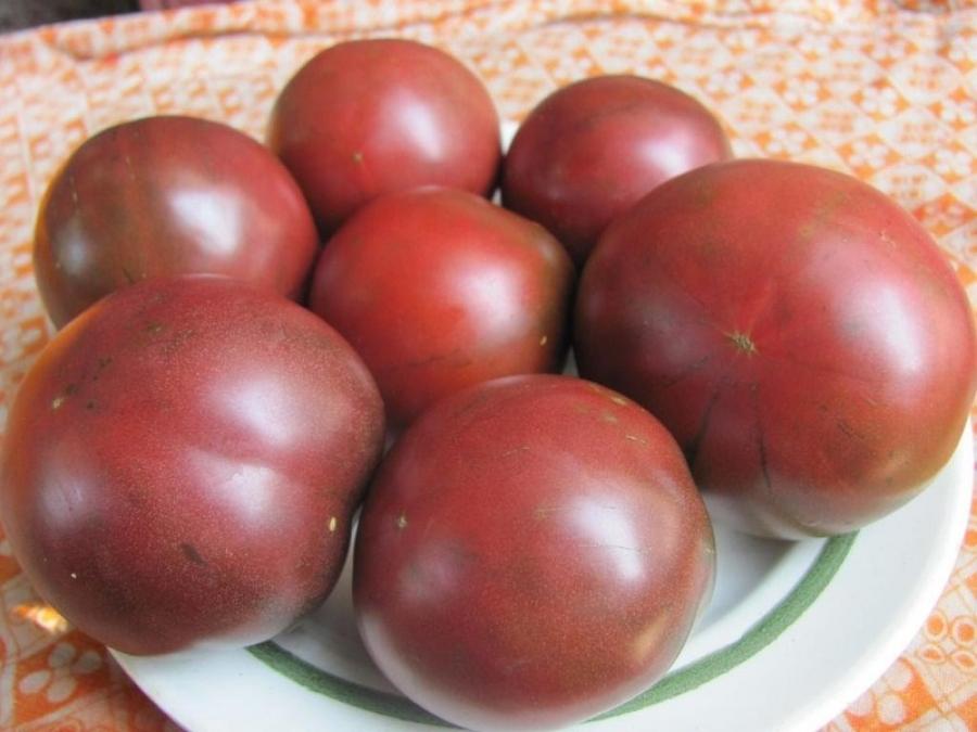Сорт томатов Цыган, описание, характеристика и отзывы, фото ...