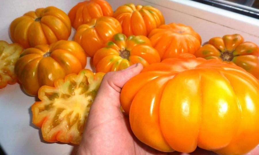 Томат Амана Оранж (Amana Orange): отзывы, описание сорта ...