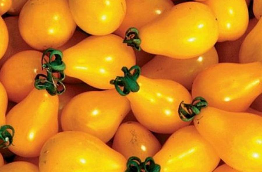 Самые сладкие сорта томатов: описание, фото, характеристика