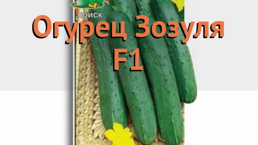 Огурец обыкновенный Зозуля F1 (zozulya f1)