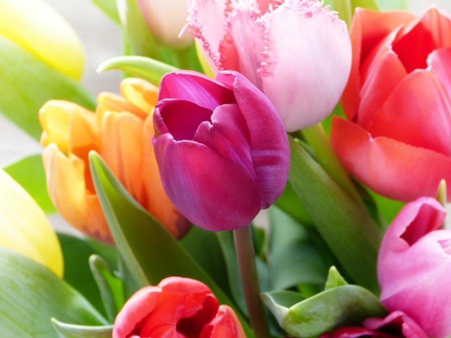 Тюльпаны Букет Тюльпанов Красочный - Бесплатное фото на Pixabay