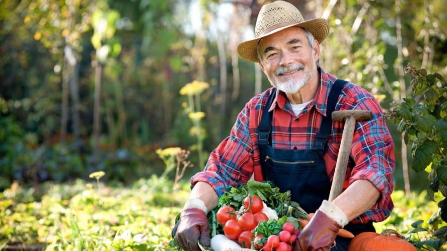 В Тамбовской области очередной огородник вырастил плантацию ...