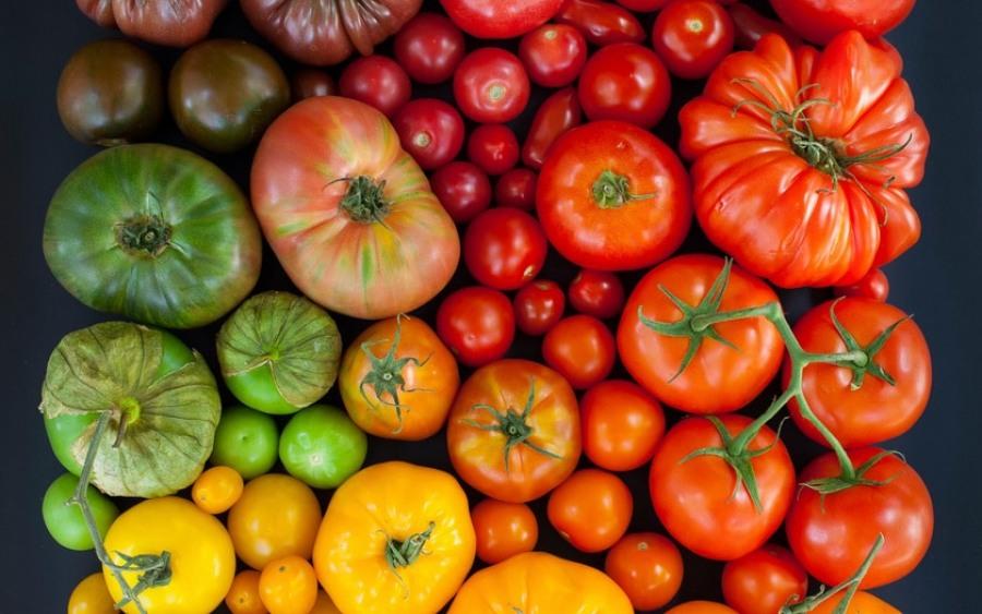 Разнообразие сортов помидоров для теплиц - Тепличка 22